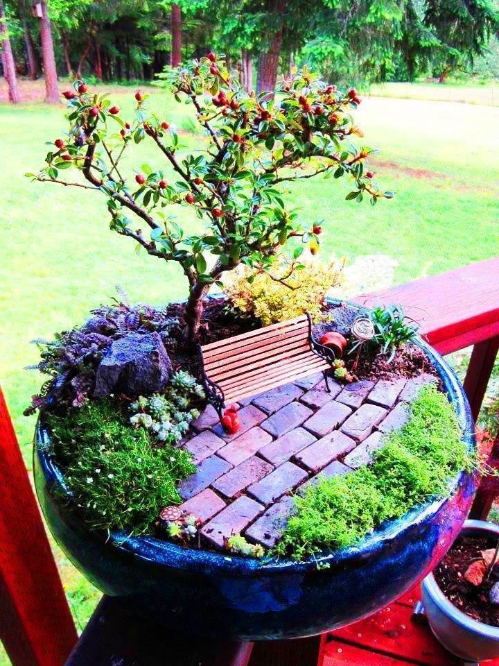 Сад в цветочном горшке своими руками