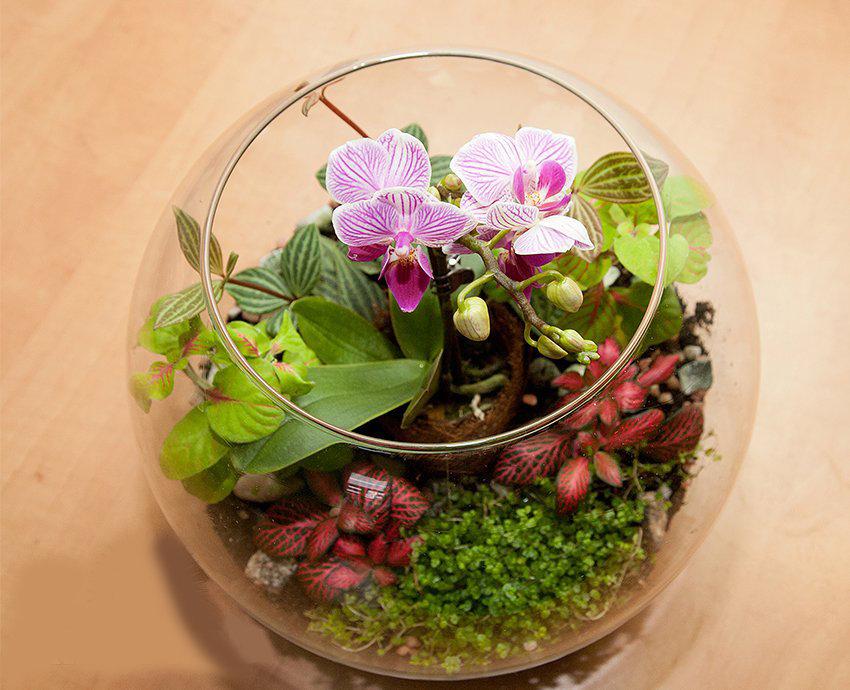 Как сделать флорариум для орхидей своими руками 32