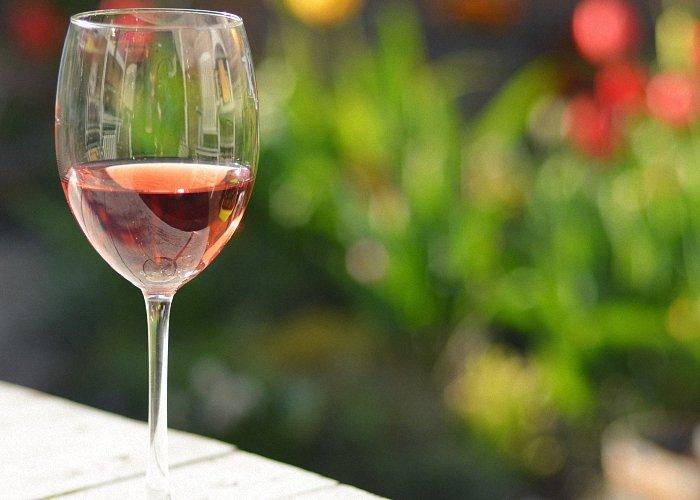 Рецепты вина из шиповника в домашних условиях 43