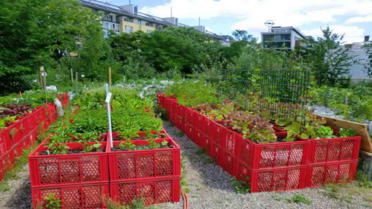 Сад и огород своими руками ютуб 47
