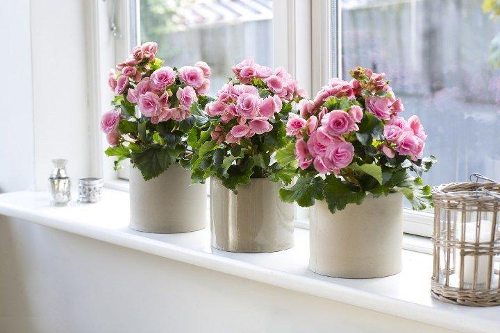 Вид цветов домашних условиях