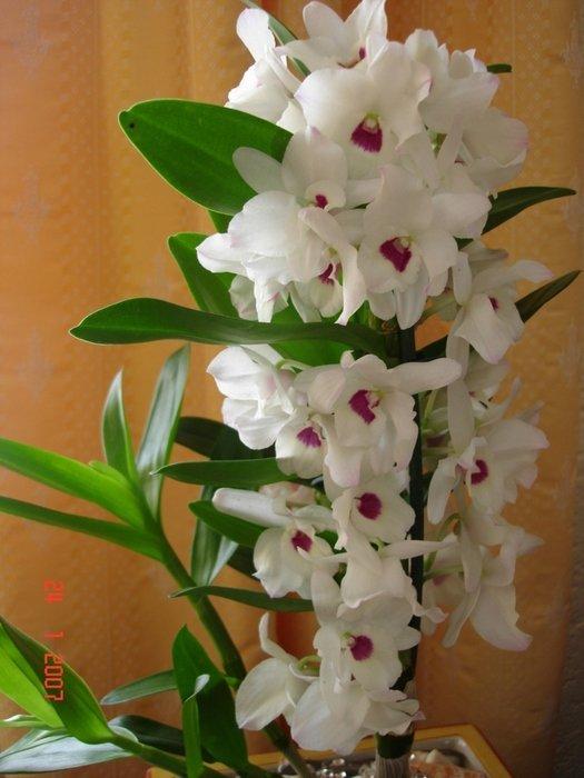 Орхидея фото и названия уход в домашних условиях фото
