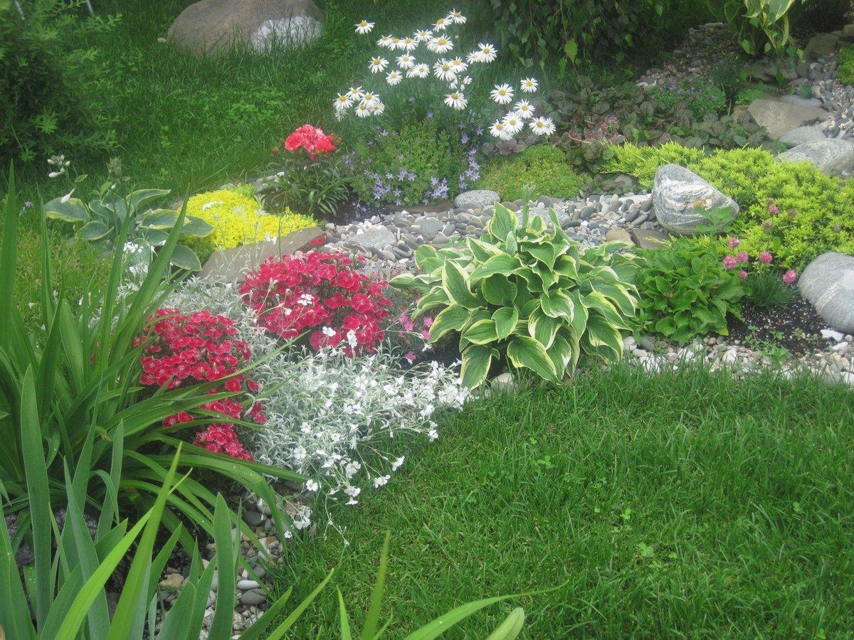 Фото многолетних цветов для клумбы с названиями