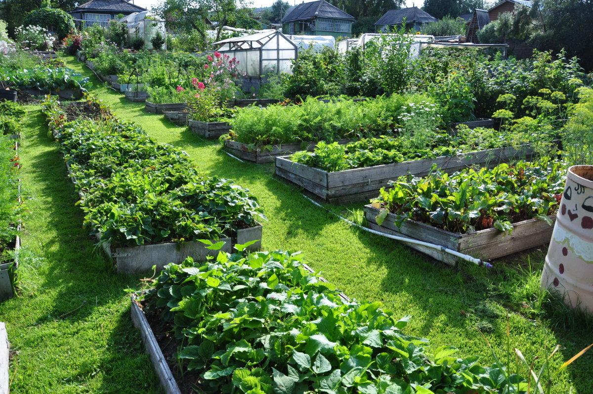 Огород как сделать его красивым 773