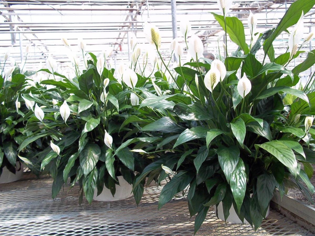 Фото красивых цветов комнатных растений