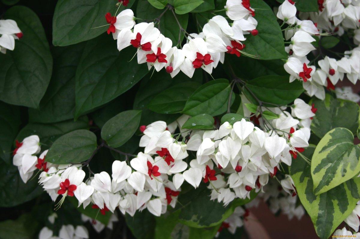 Комнатные цветы с белыми цветами название фото