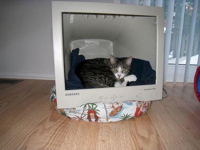 Домик из монитора для кошки своими руками 158