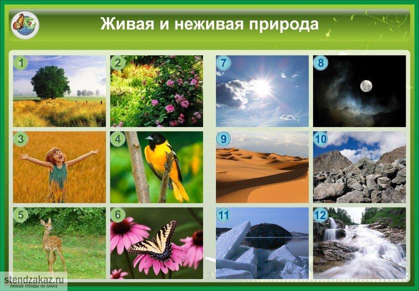 Живая и неживая природа поделки 32