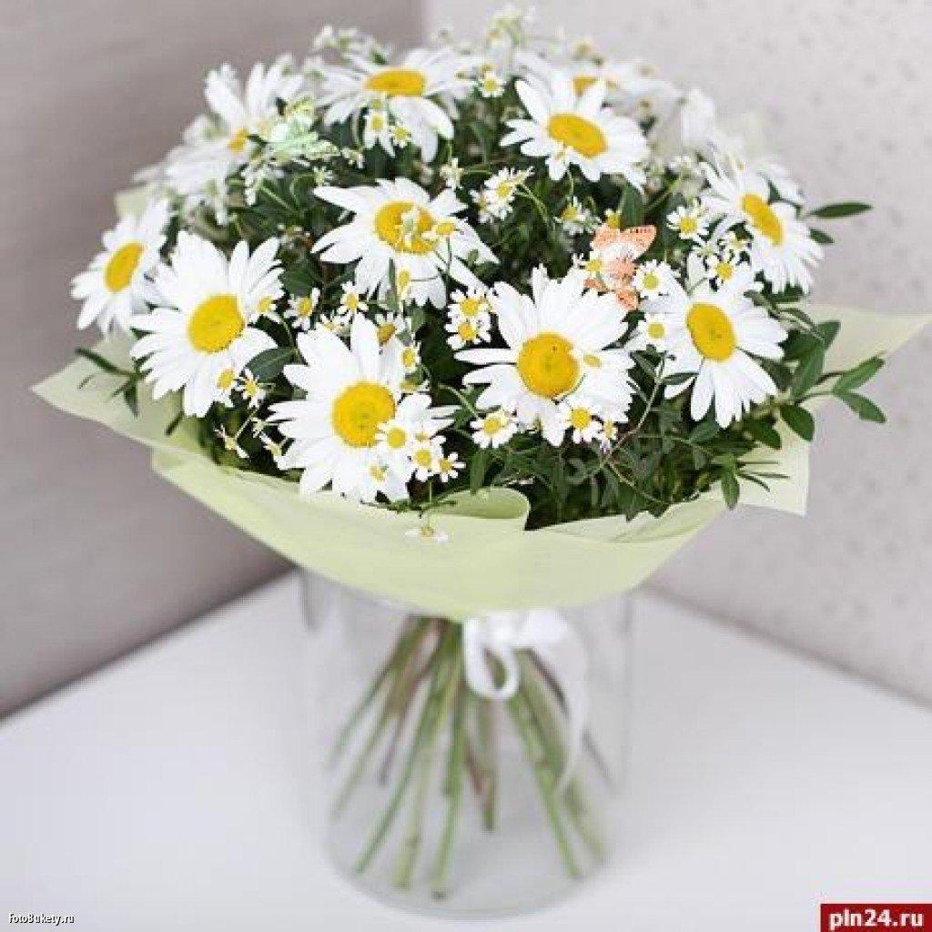Фото цветов букетов ромашек девушки