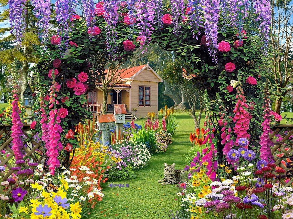 Какие цветы для сада