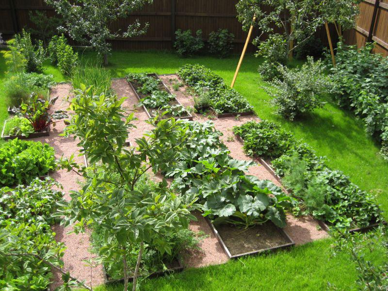 Как сделать сад из огорода 890