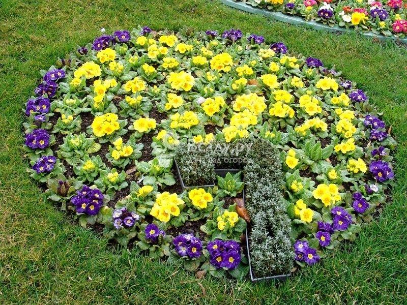Рассада многолетних цветов для клумбы 75