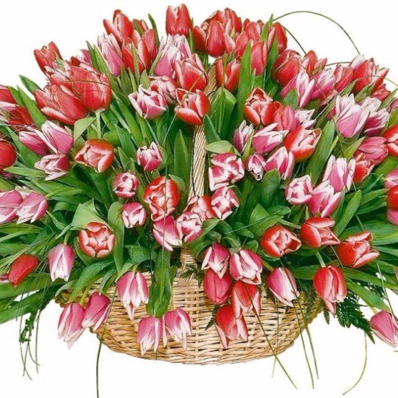Купить сажанцы розы оптом в москве дешево какой подарок подарить директору на юбилей