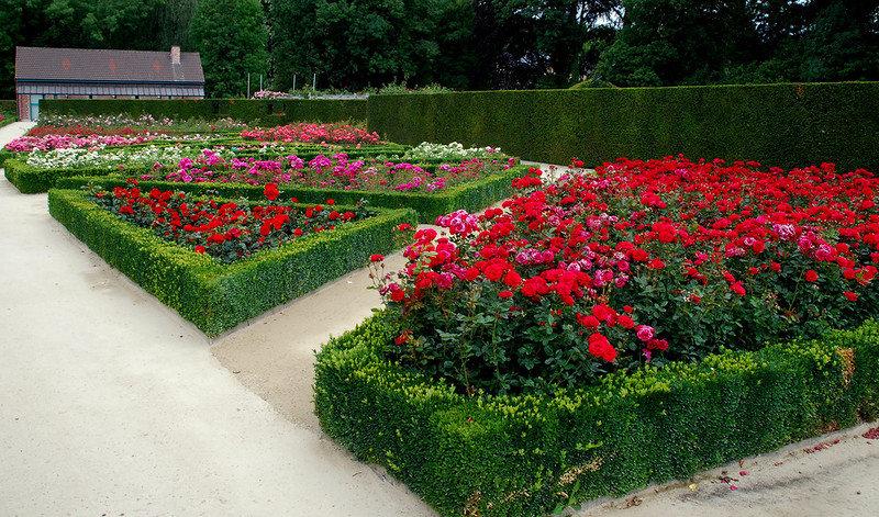 Дизайн клумбы с розами своими руками на даче фото 32