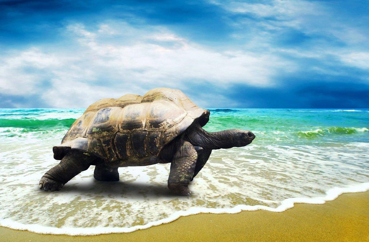 Черепахи поздравления