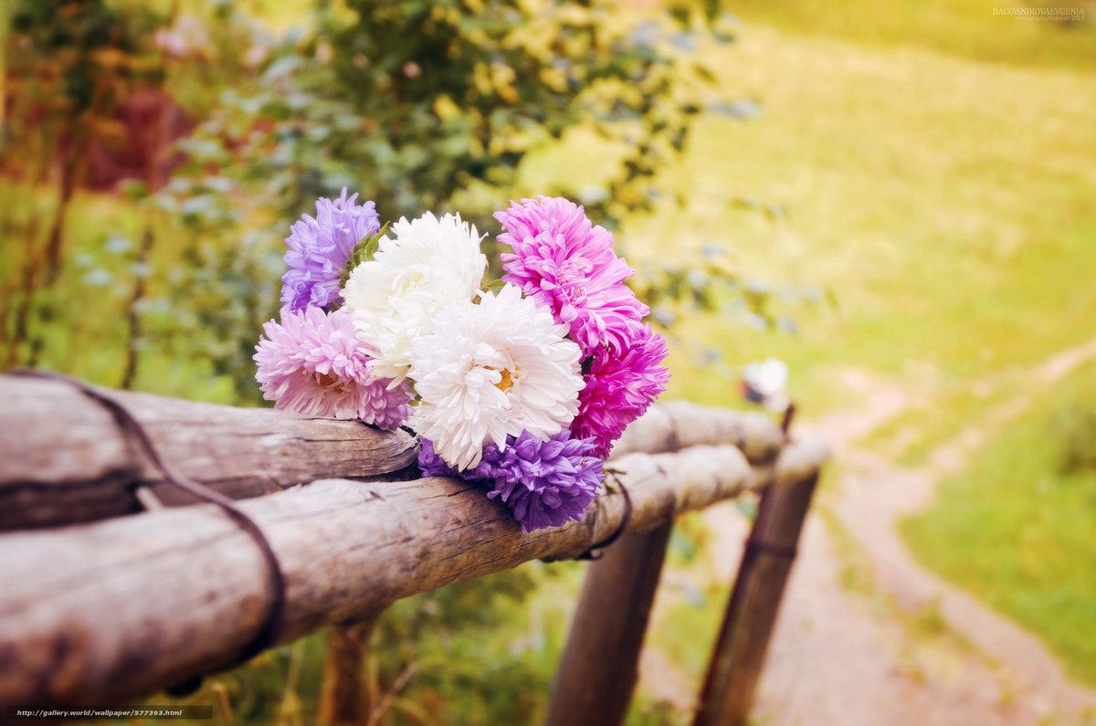 чистое золото фото цветов
