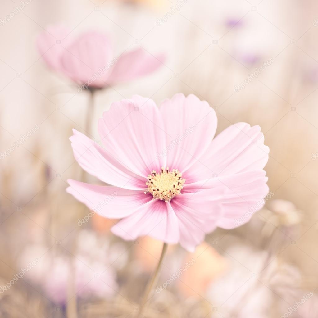 Фото цветов пастельных тонов