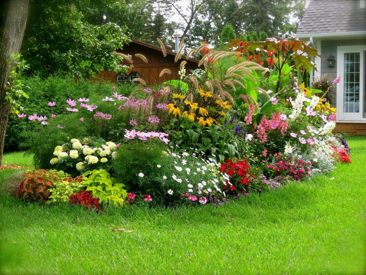 Цветы для больших клумб фото