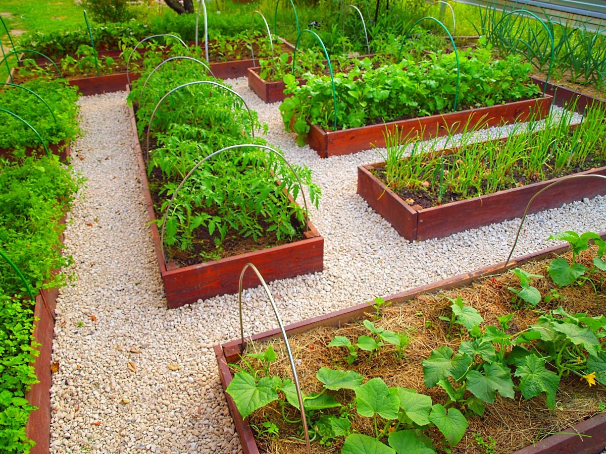 Как можно сделать грядки в огороде фото