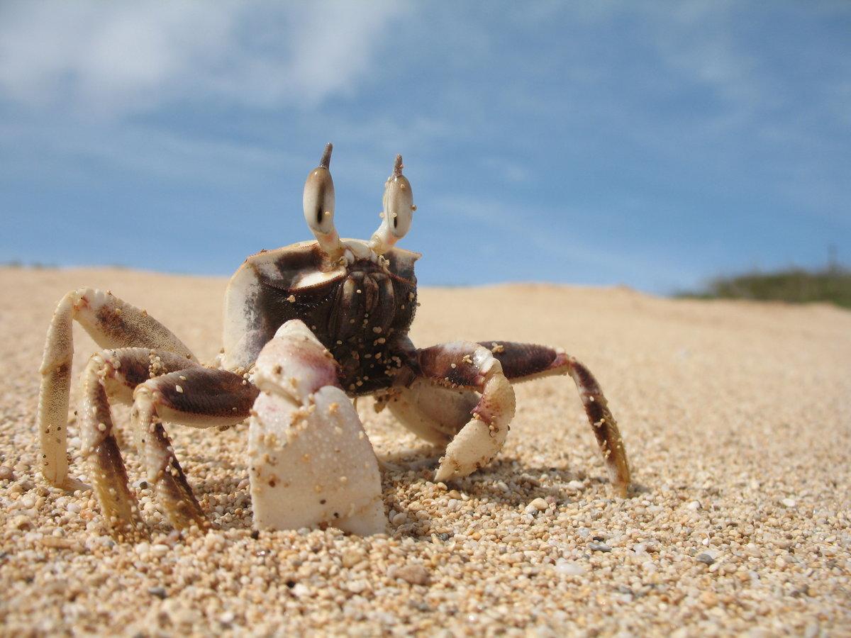 Краб на песке  № 96579 загрузить