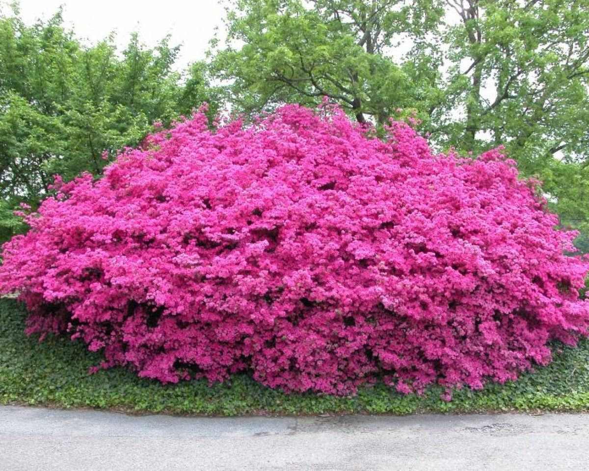 Фото и название кустов цветов