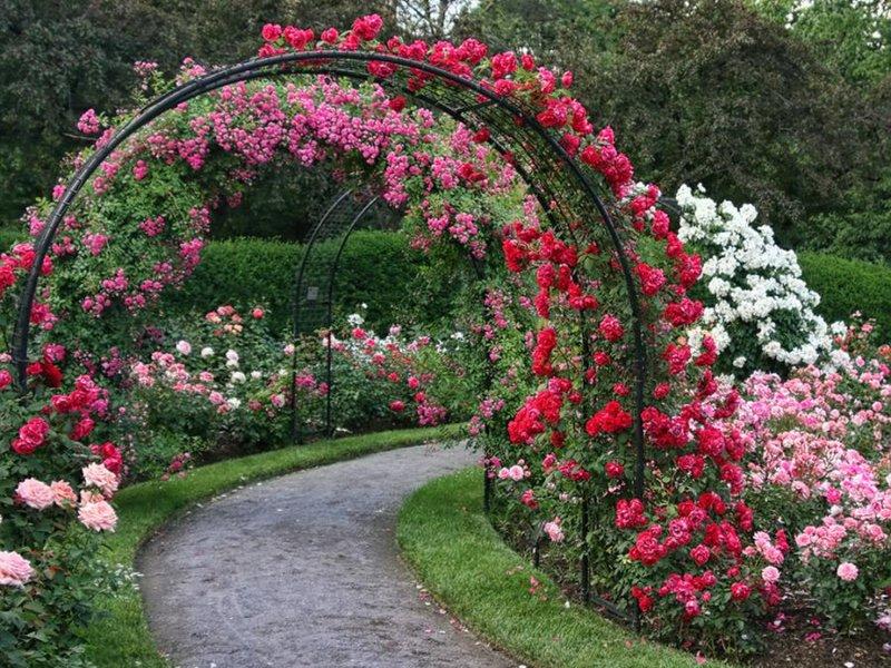 Украшение сада цветами