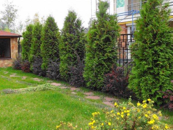 Какие кустарники и деревья можно сажать летом 65