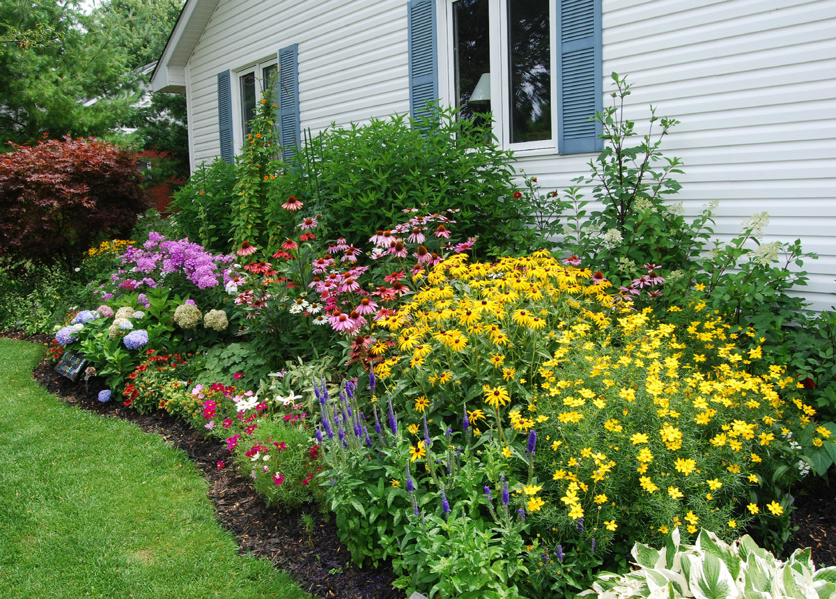Какие цветы можно посадить у дома фото