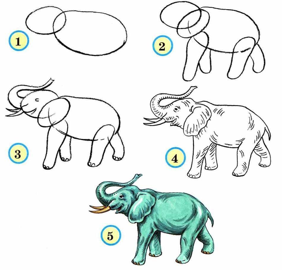 Рисунки по этапно животные