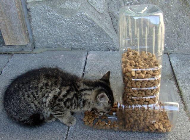 Кормушки для кошек своими руками фото оригинальные идеи