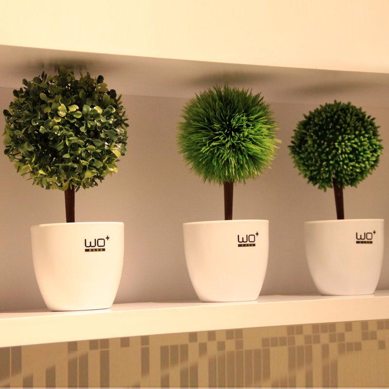 Декоративные растения для дома купить