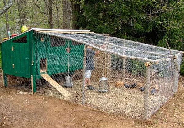 Клетка для клуши с цыплятами
