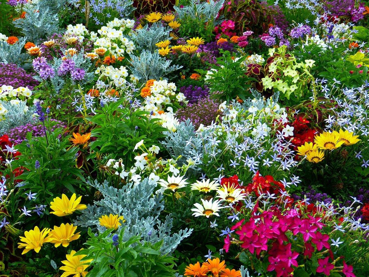 Наименование и фото садовых цветов