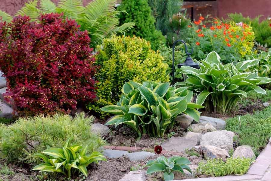Орхидея: уход и пересадка, полезные советы