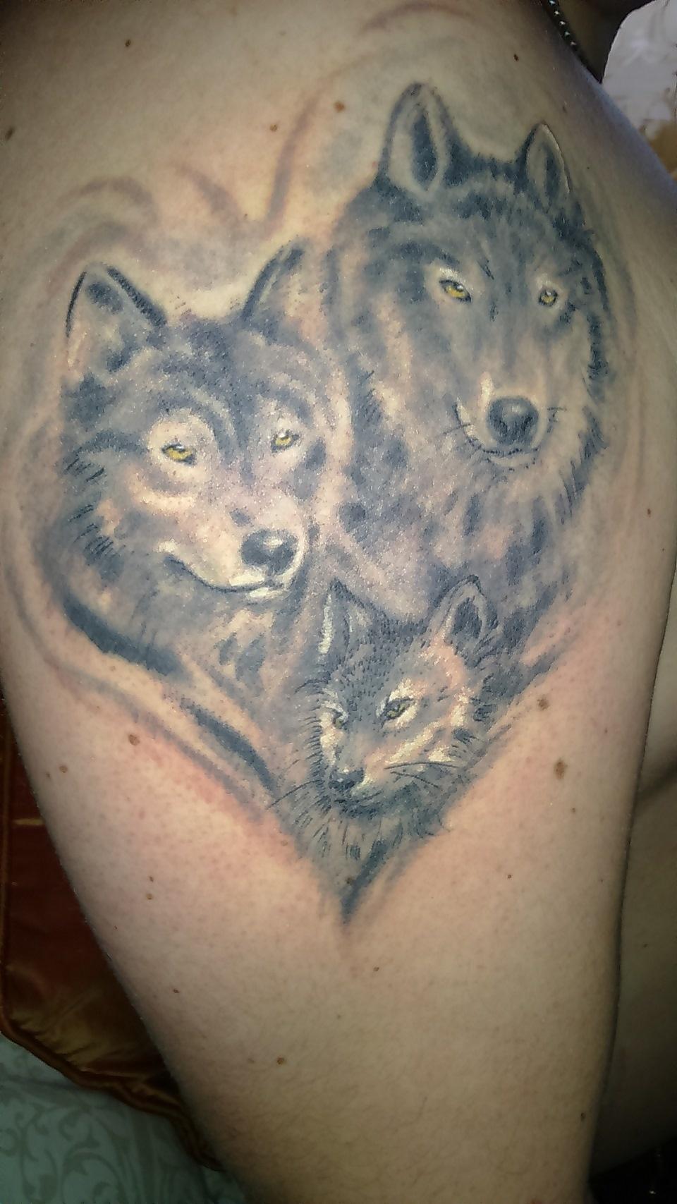 Красный волк фото - m