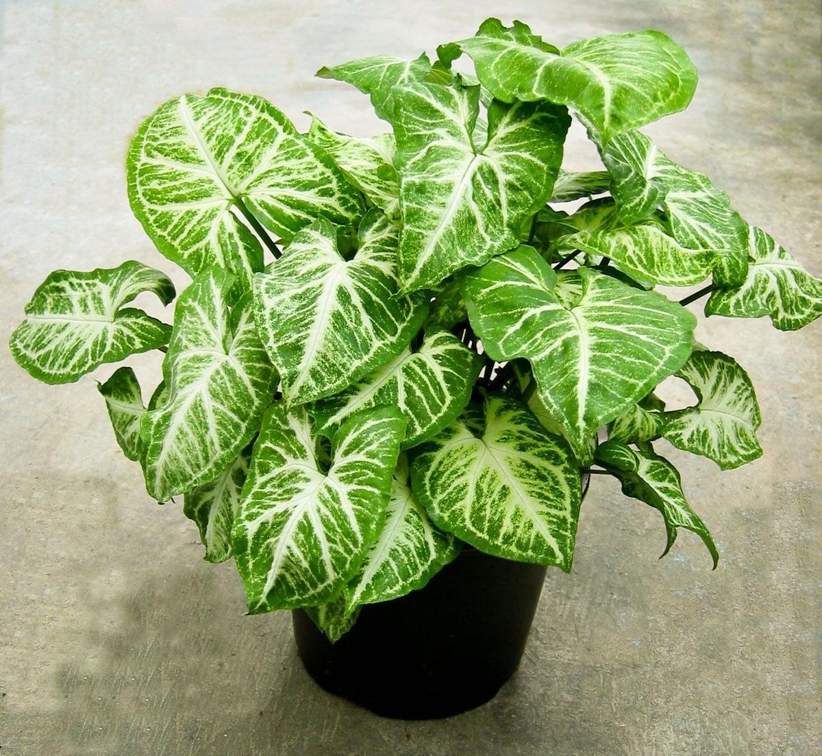 Влаголюбивые комнатные растения Декоративные растения - описания 7
