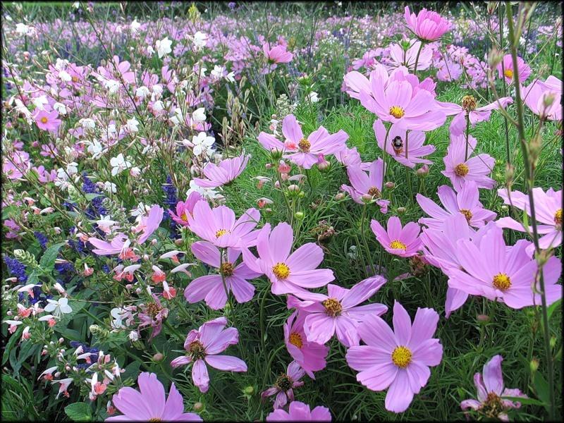 Долгоцветущие цветы в саду и