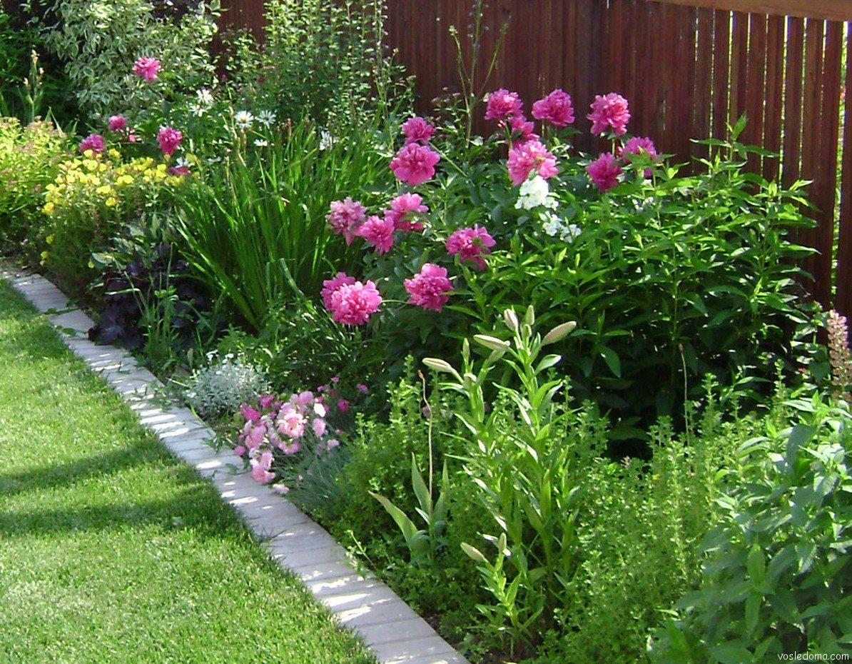 Лобелия: посев семян и выращивание рассады 45