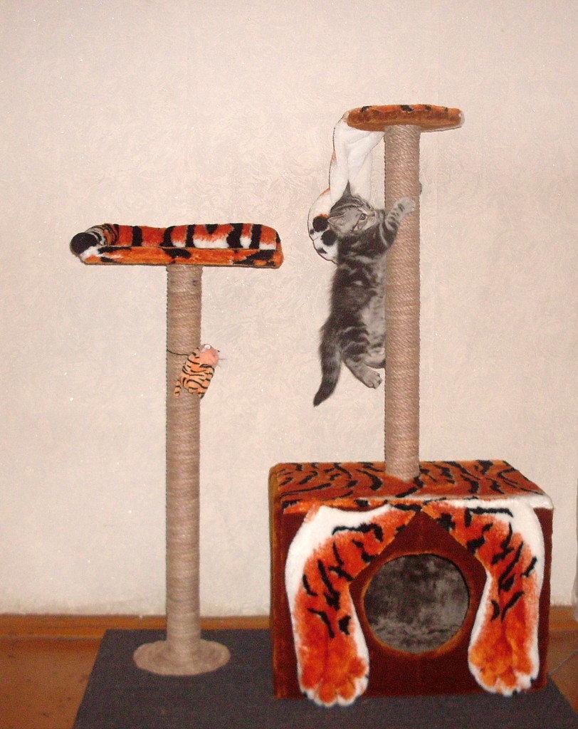 Домик для кошки своими руками пошаговая 27