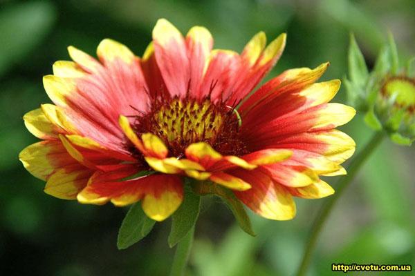 Яркие летние цветы