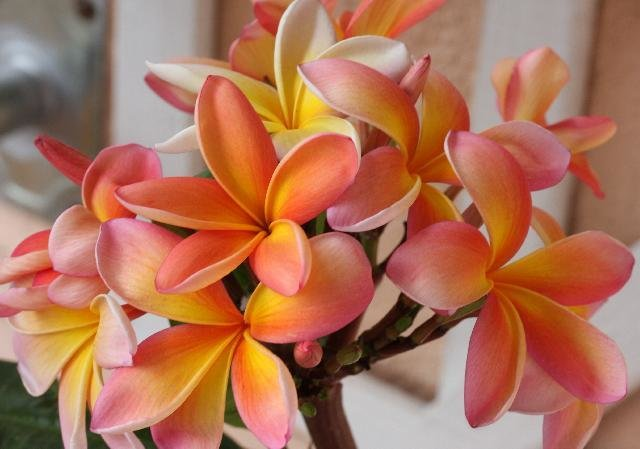 Редко цветущие комнатные цветы