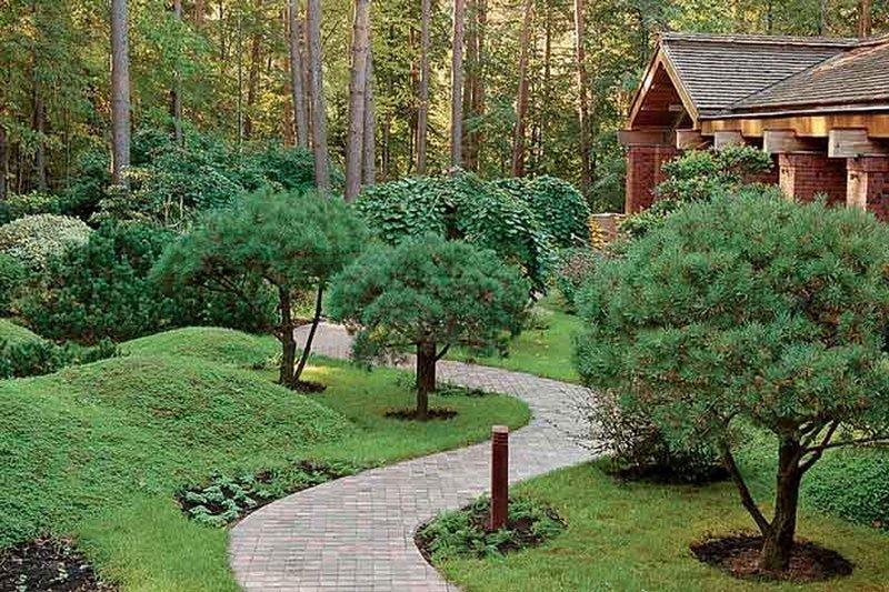 Ель на садовом участке дизайн
