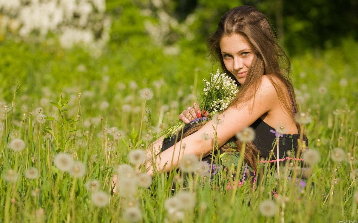 хризантема однолетняя фото цветов