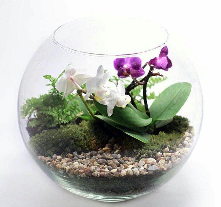 Как сделать флорариум для орхидей своими руками 27