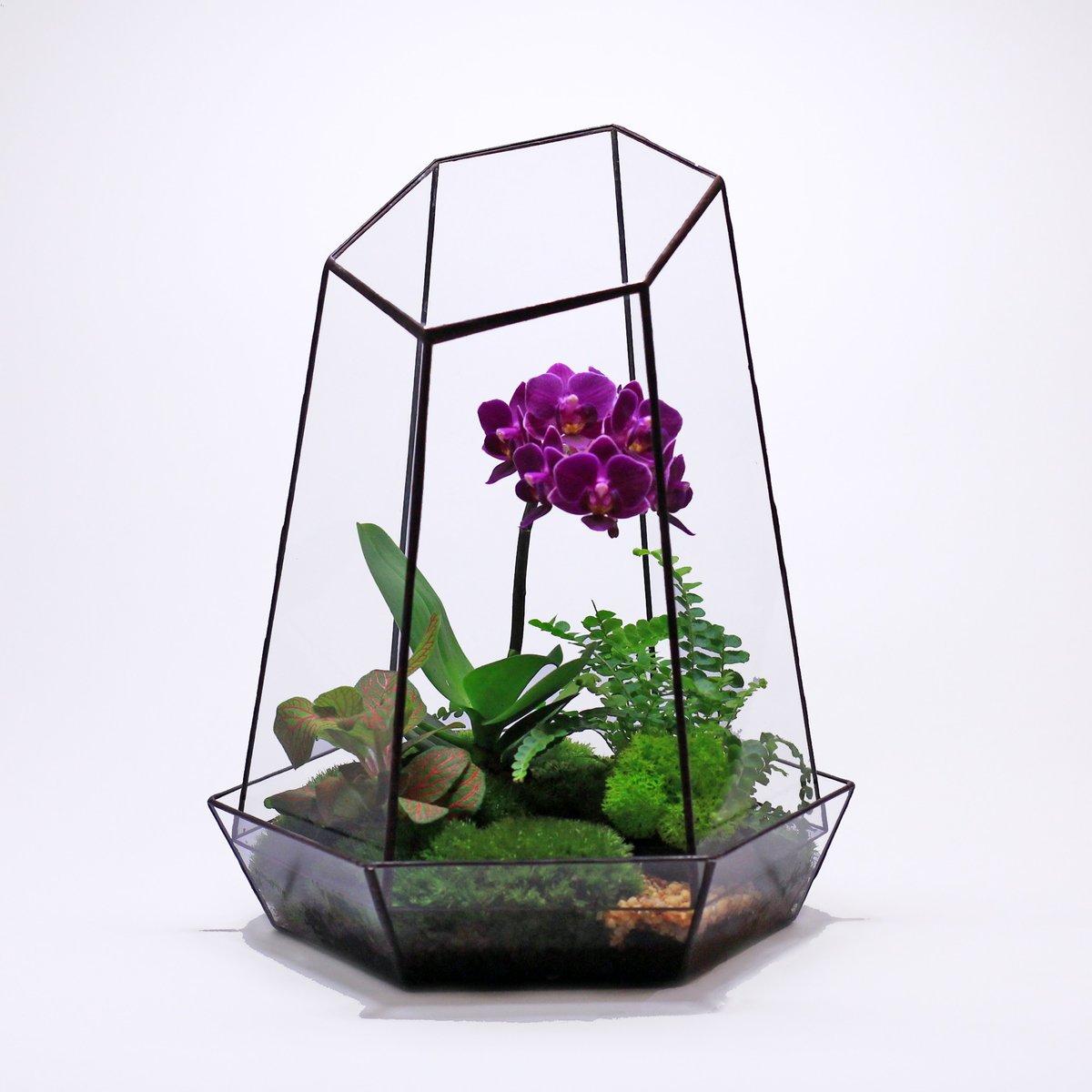 Как сделать флорариум для орхидей своими руками 92