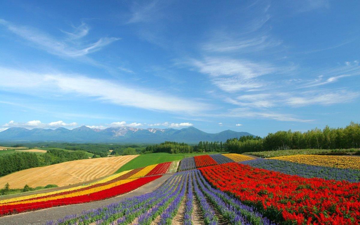 Лучшие фотографии цветов на полях