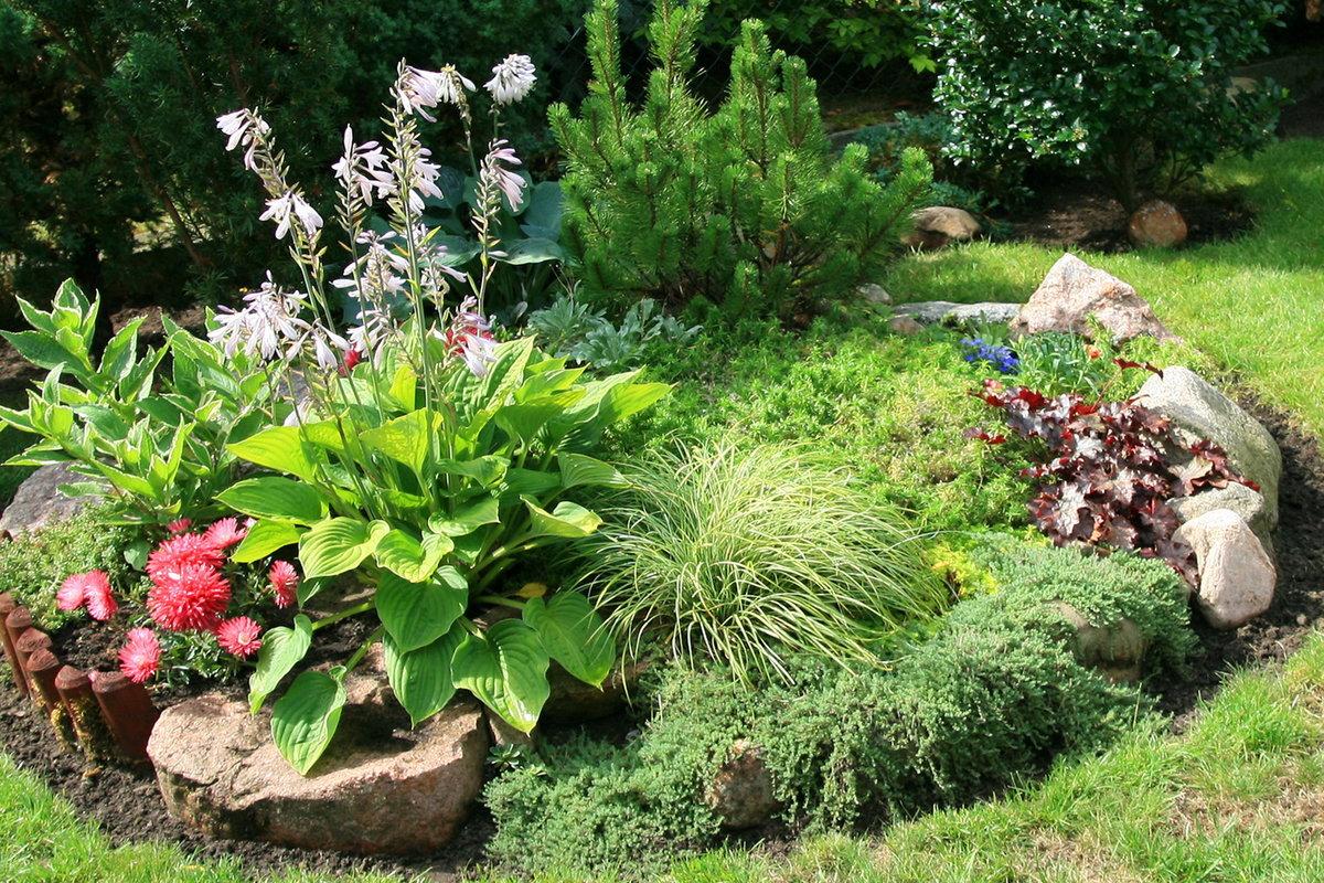 Цветы и растения на альпийской горке фото