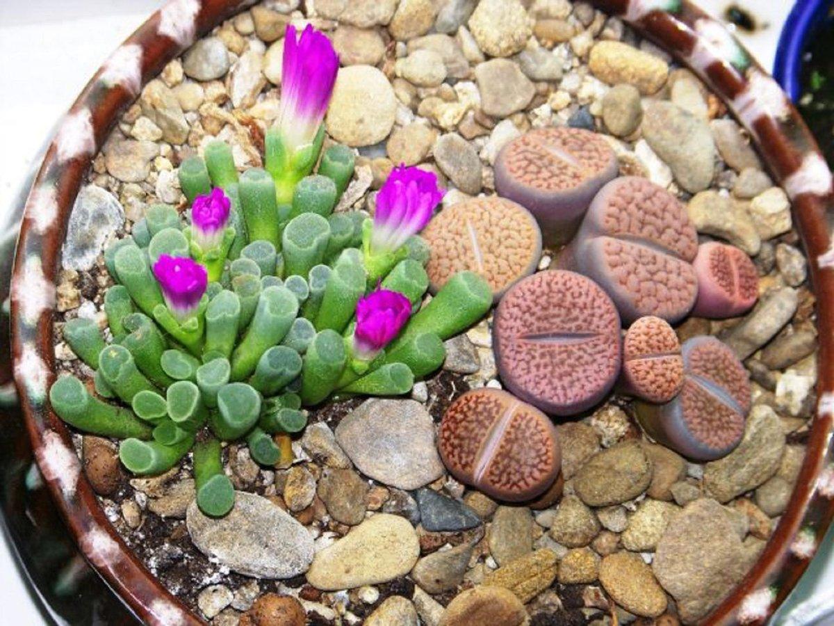 Фото живых цветов с описанием о них