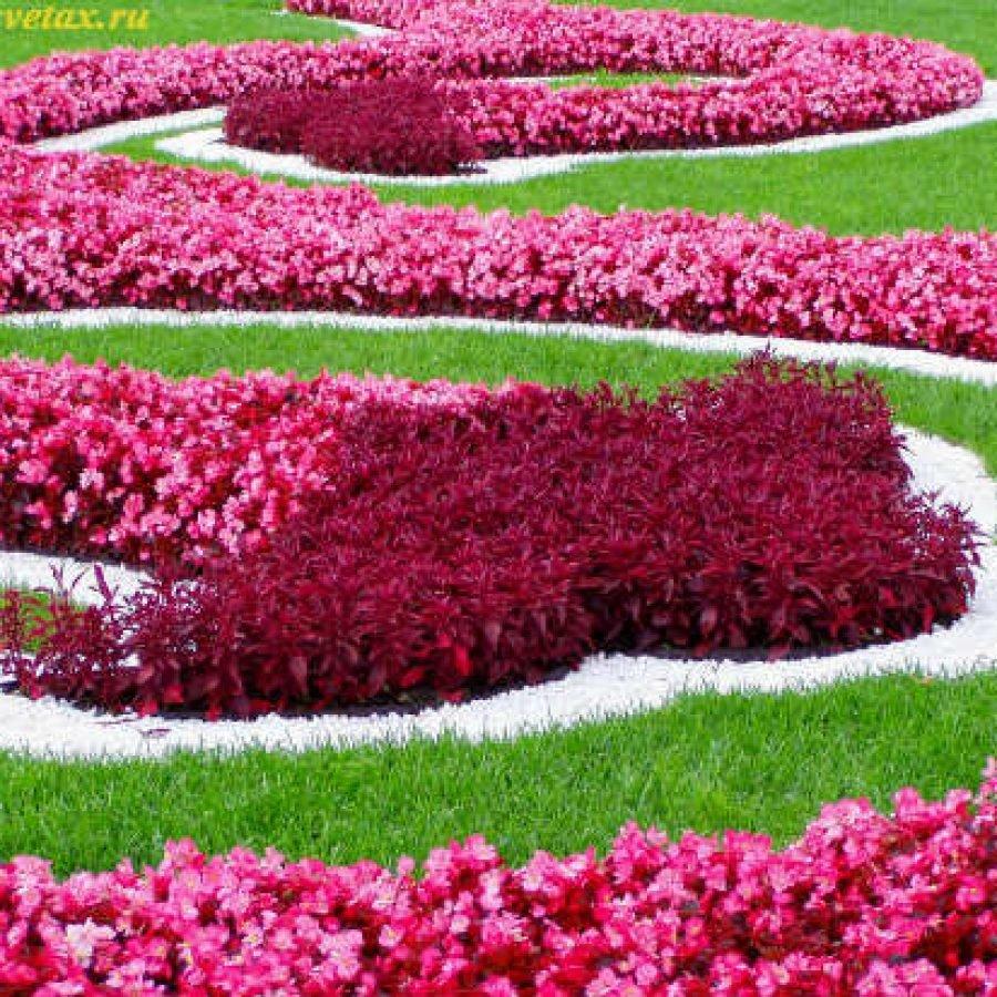 Название и фото цветов для клумбы