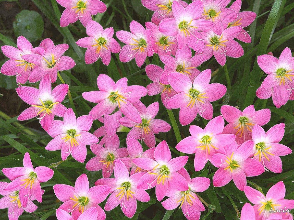Цветок выскочка фото и название
